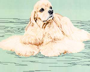 American Cocker Spaniel-Blonde (Body)